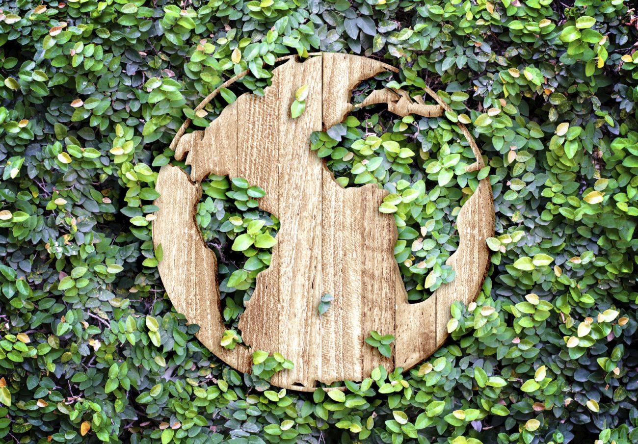 Journee-mondiale-de-l-environnement.jpg